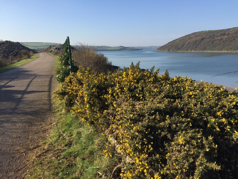January 2017 on the Camel Trail